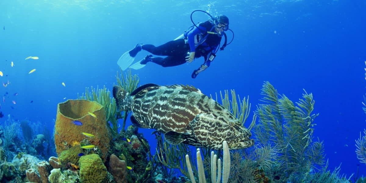 Scuba Diving Games
